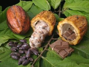 La Algarroba Más Nutritivo y Deliciosa Que El Chocolate