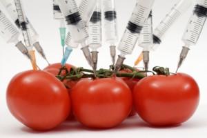 Peligros y Desventajas de los Alimentos Transgénicos Vegetales
