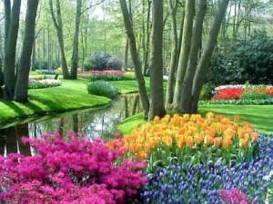 Amar Komo Aman las Flores – Letra y Mp3 de Lin