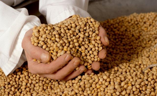 Soja Fuente de proteínas .