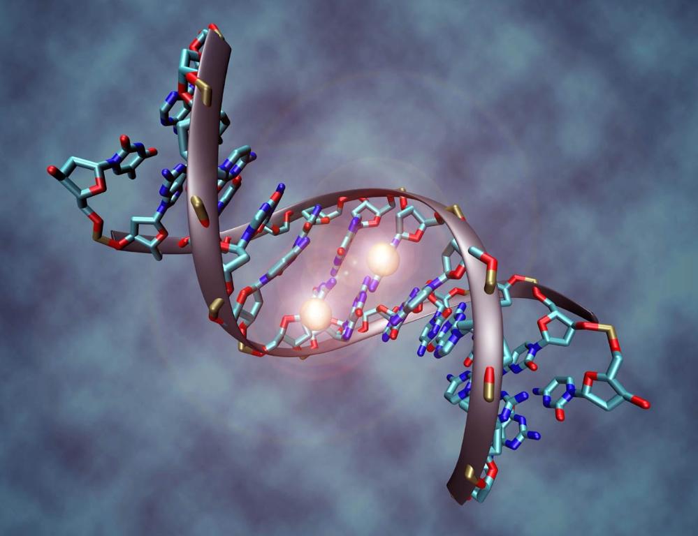 ¿Que es el Genoma Humano?