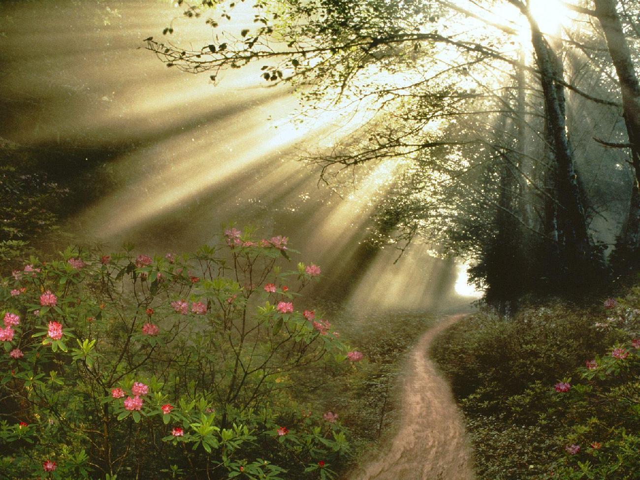 Inicio » Diario » Palabras de Consuelo de Un Dios