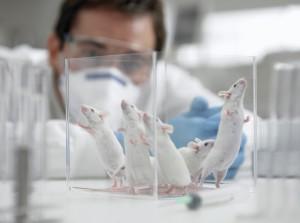 pruebas-laboratorio-animales