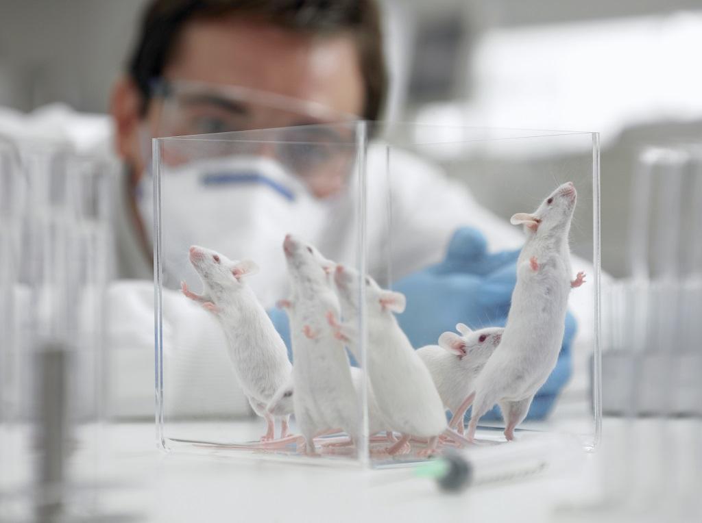 Larga Historia de Abuso a Animales Vivos en Pro de la Ciencia