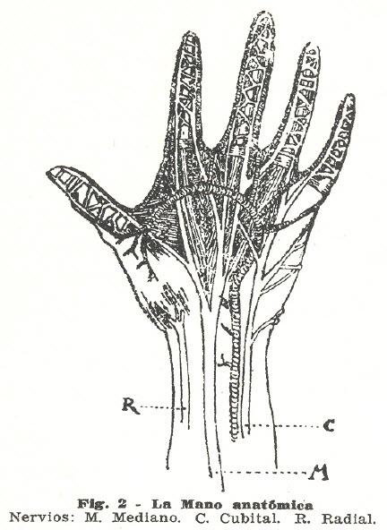 mano-anatomica