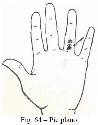 f64-pie-plano