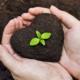 Cómo crear y diseñar Pacas Bio-digestoras ecológicas